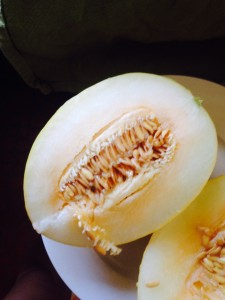 canary melon breakfast lfrv beauty