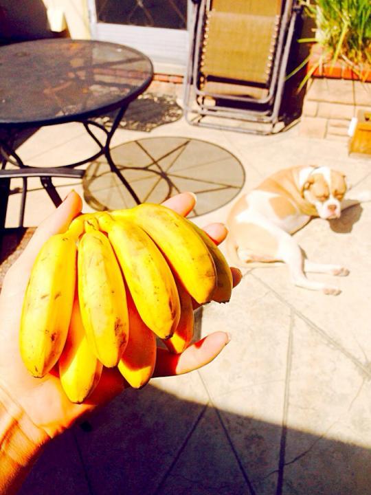 baby bananas